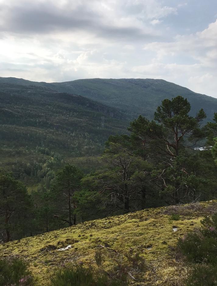 Torsdag 13.8: Raskt opp til utsikt. Rispingen (742 moh) i bakgrunnen.