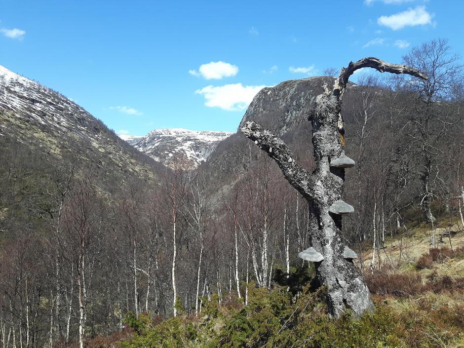 snøfritt før 1. Mai 2017 Kvitlen Har Barmarksforhold og det er kun litt snø på toppen når du går Nordre Kvitladalen rundløype Bilde er tatt bak Kvitlen og inn i Nordre Kvitladalen