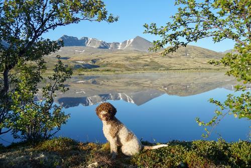 Rago med fjellmassivene Høgronden, Midtronden og Digerronden i bakgrunnen (Rondane)