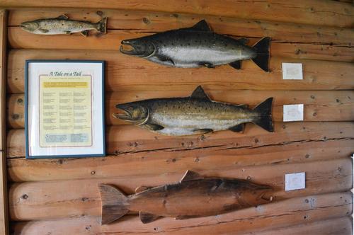 Laksefiske har preget hytta siden den ble etablert  1901