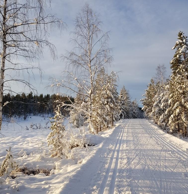 Skiløypene ved Kleivvann 02.12.2019.