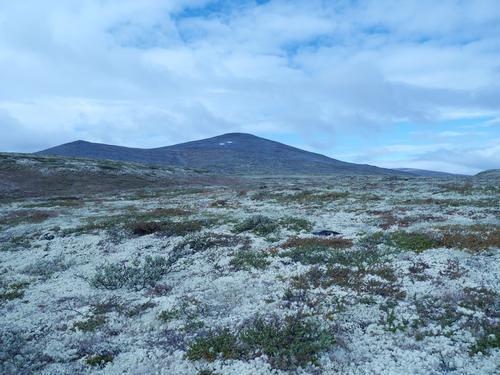 Gråhøe 1663 moh.
