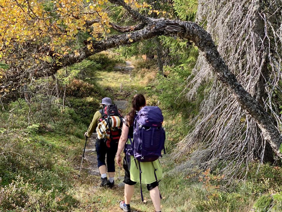 På Skrim, mellom Sørmyrseter og Hoenseter etter overnatting på Sørmyrseter. En helg i september i strålende høstvær.