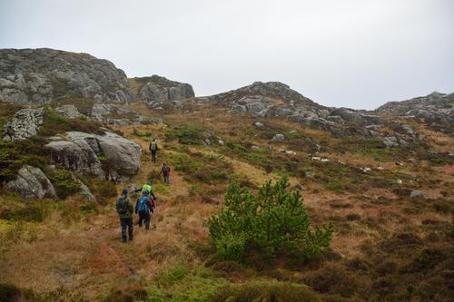 Ein våt dag på Utsira med Ung Botaniker for å lære om fremmedarter i det vestlandske kulturlandskapet. Her presentert med sitkagran midt i kystlynghei som villsauene held ved like.