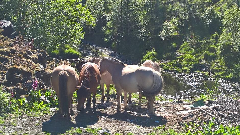 Hestar i Avedalen