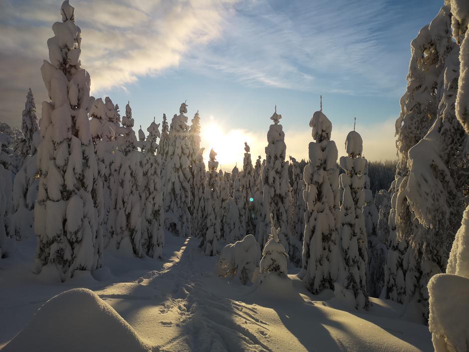 Vinter i Vestmarka