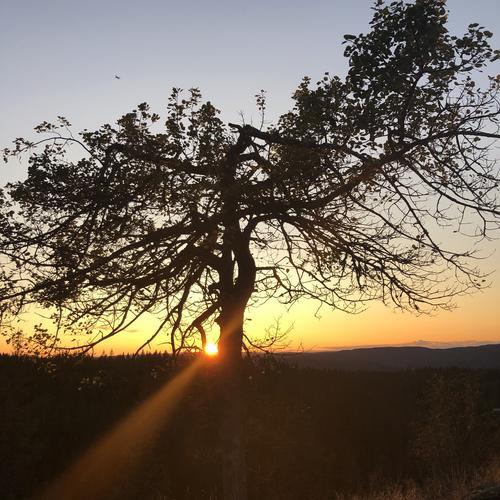 Solnedgang fra Skjennungstua
