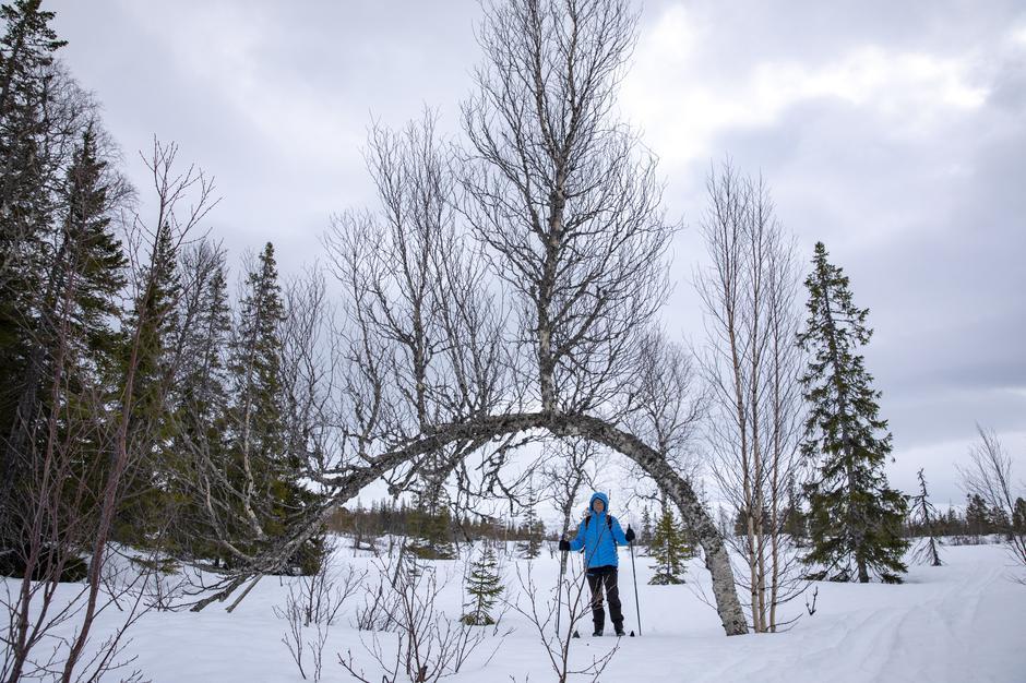Skogens portal