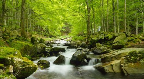 Alvøskogen