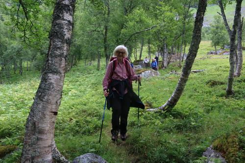 Skogen i Herdalen