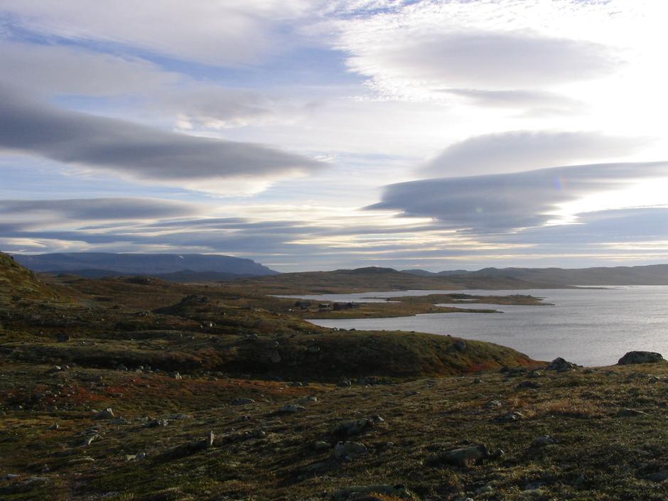 Krækkja på Hardangervidda i September Foto:Thorleif Lantz