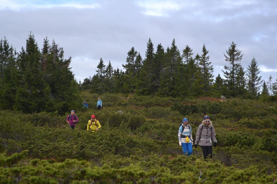 Ned fra Nyseterhøgda