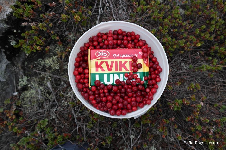Tyttebær tur med kvikk Lunsj som en gevinst til man er ferdig. Turen blir ikke det samme uten!