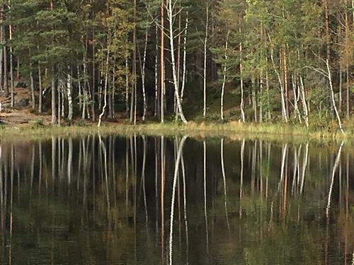 Speiling i Rundvann. Østmarka. Oslo. September 2016