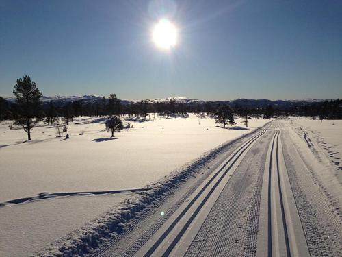 Skiterrenget i Nordmarka er vel verdt turen dit.