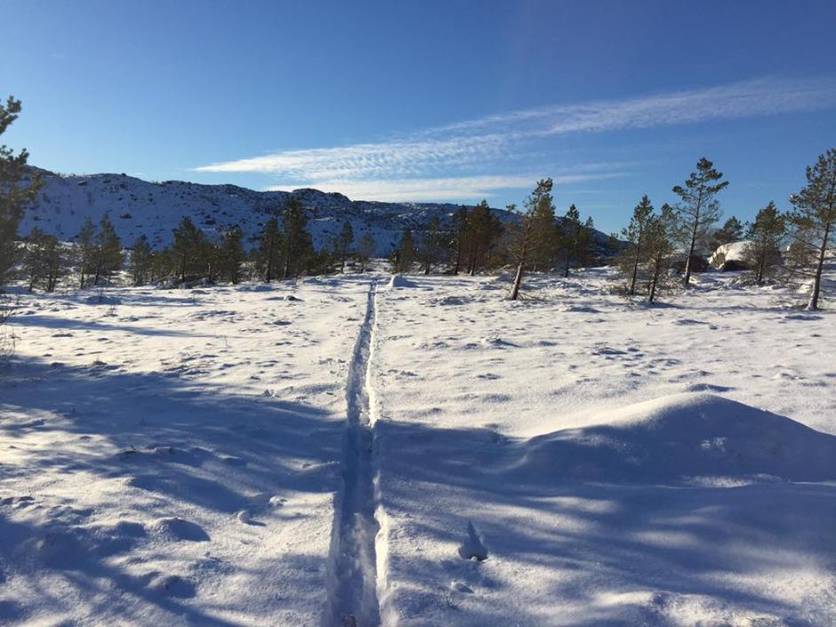 Madland 400 moh og Brekko 338 moh 16. januar 2017  har også snø, men dårlige skiforhold.