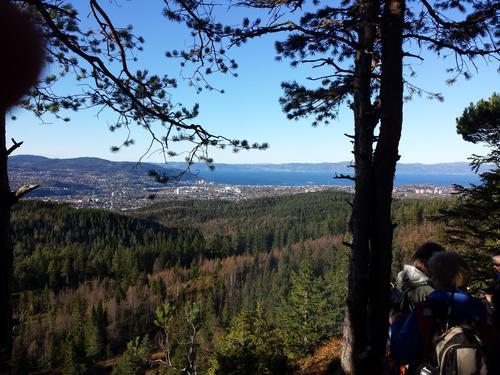 Utsikt fra Strindamarka