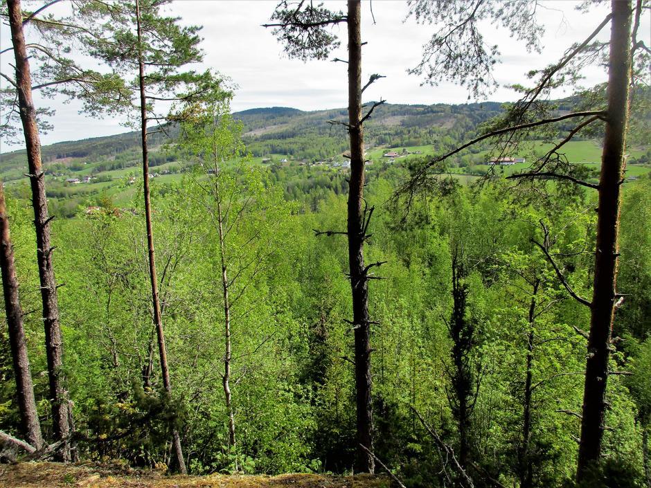Utsikt mot Gjørudshaugen.