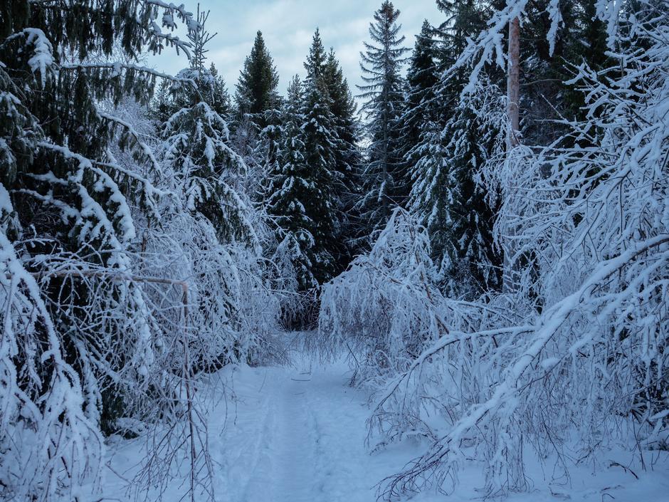 Snøen har lagt seg, men fotturer skal det bli likevel