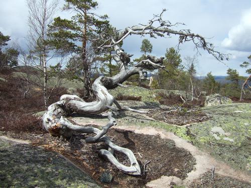 Skulptur på toppen av Risfjell.