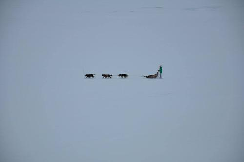 Hundespann i vinterparadis