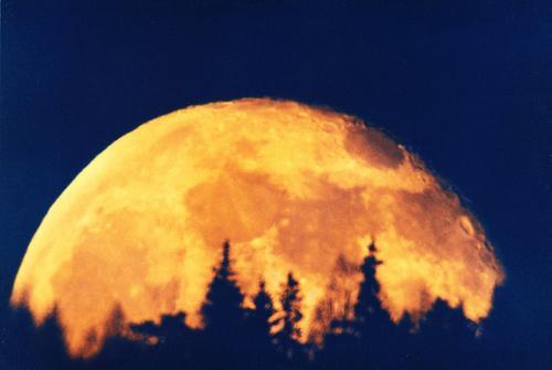 Fullmånen på vei opp over skogen