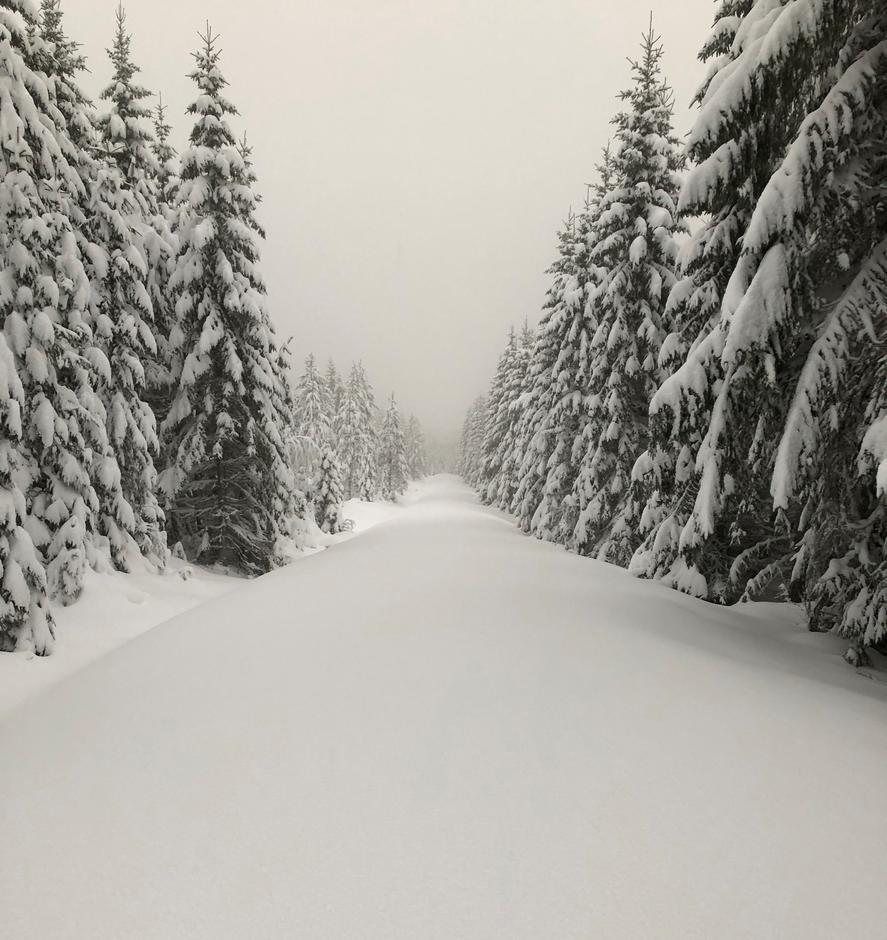 Ubrøytet vei inn i Finnskogens vakre vintereventyr