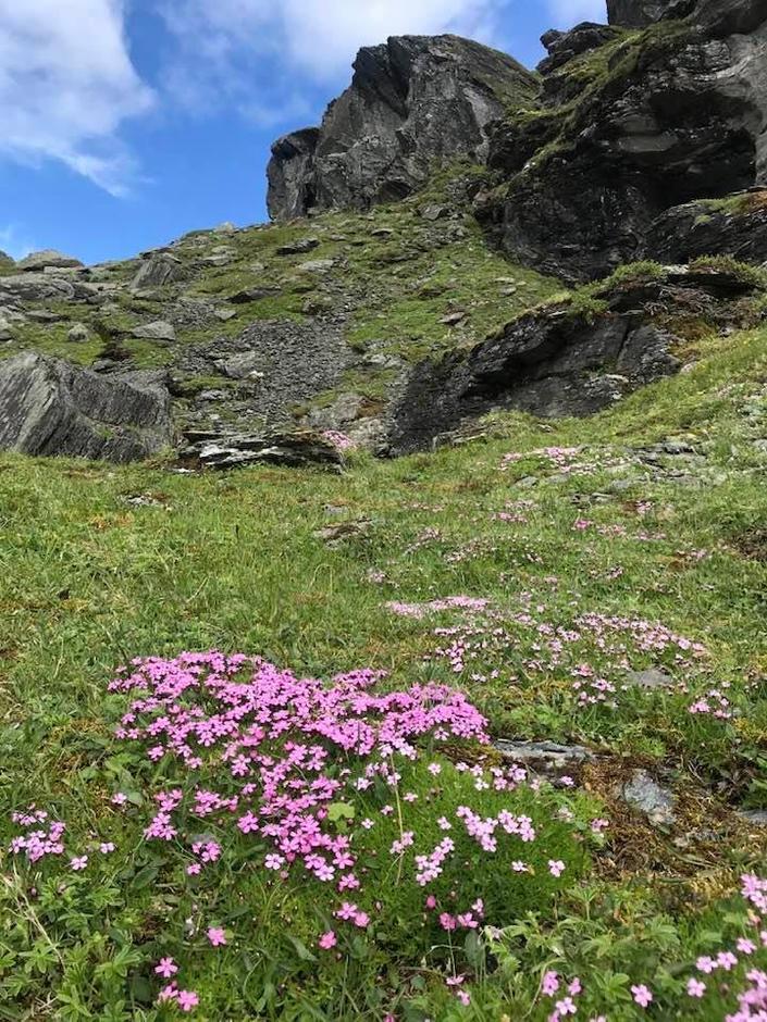 BLOMSTERPRAKT: Floraen rundt Stranddalen er kjent for å være spesielt frodig. Nå og i ukene som kommer blomstrer det over alt i fjellet rundt perla i Ryfylkeheiene.