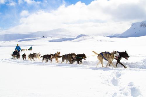 Vinterferie og hundekjøring på Haukeliseter fjellstue