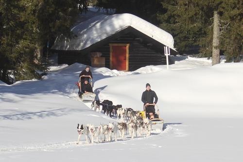 DNT ung inviterer til hundekjøring