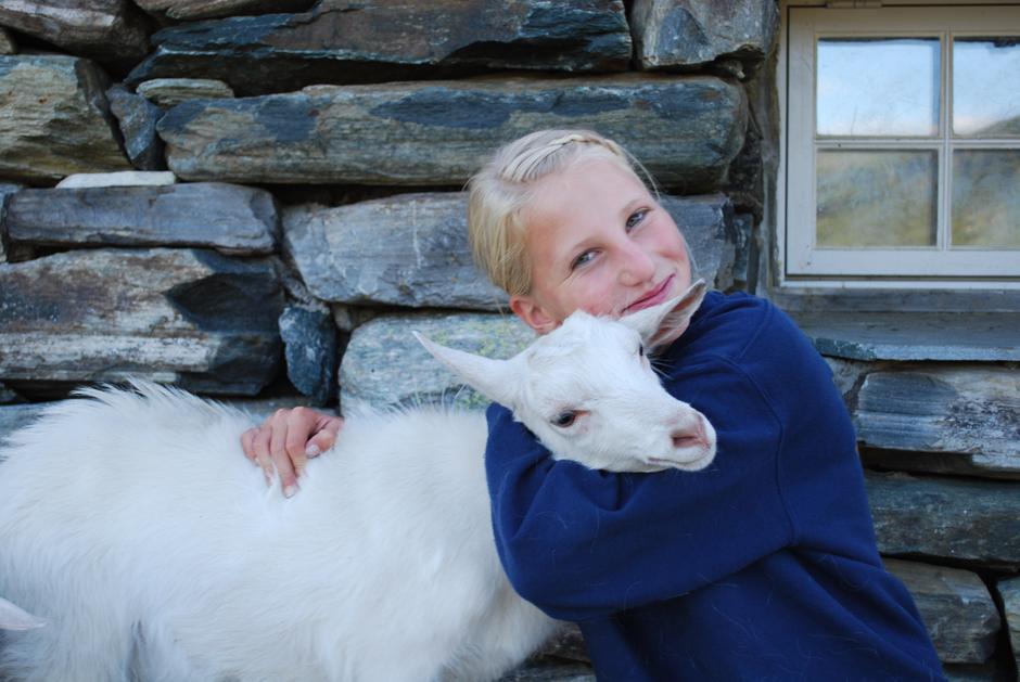 Dyr på Iungsdalshytta. Foto: Mari Kolbjørnsrud
