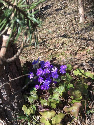 Våren er på vei