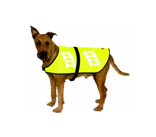 Pass godt på hunden din i høstmørket