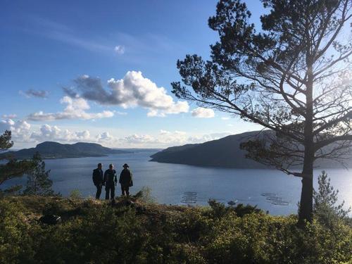 Utsiktpunktet Sjiddknatten på Nesvikheia er verdt eit besøk