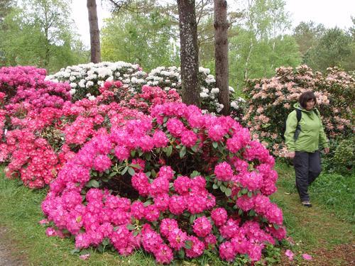 Blomstring i Arboretet