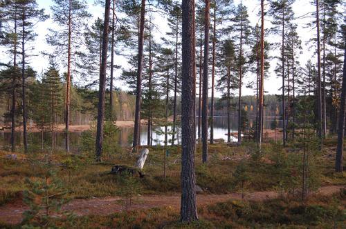 Mosjømarka med Mosjøen i bakgrunnen.