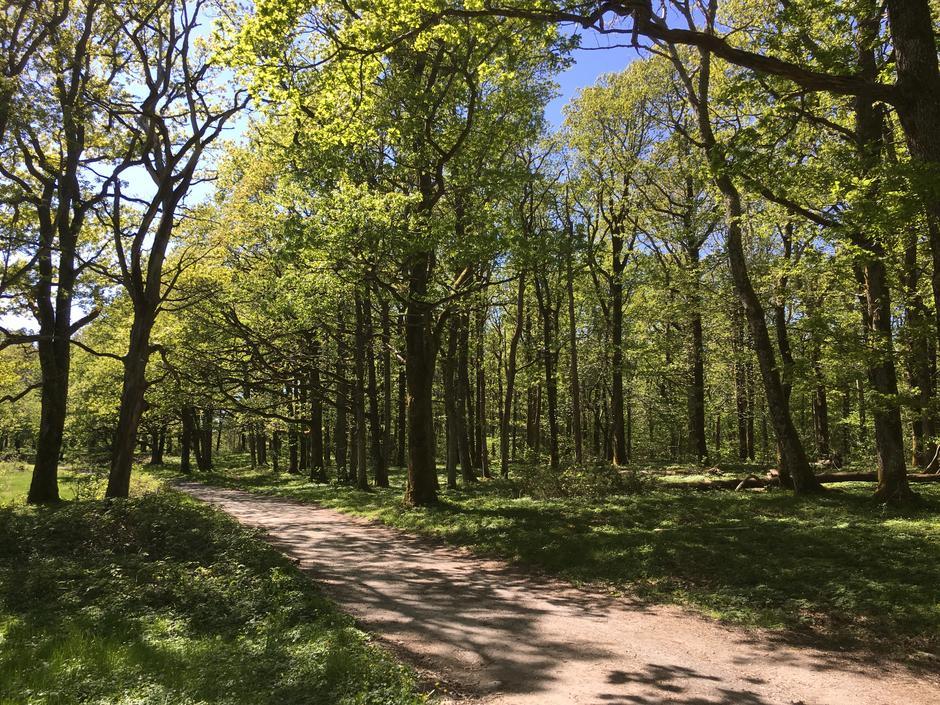 Eikeskogen