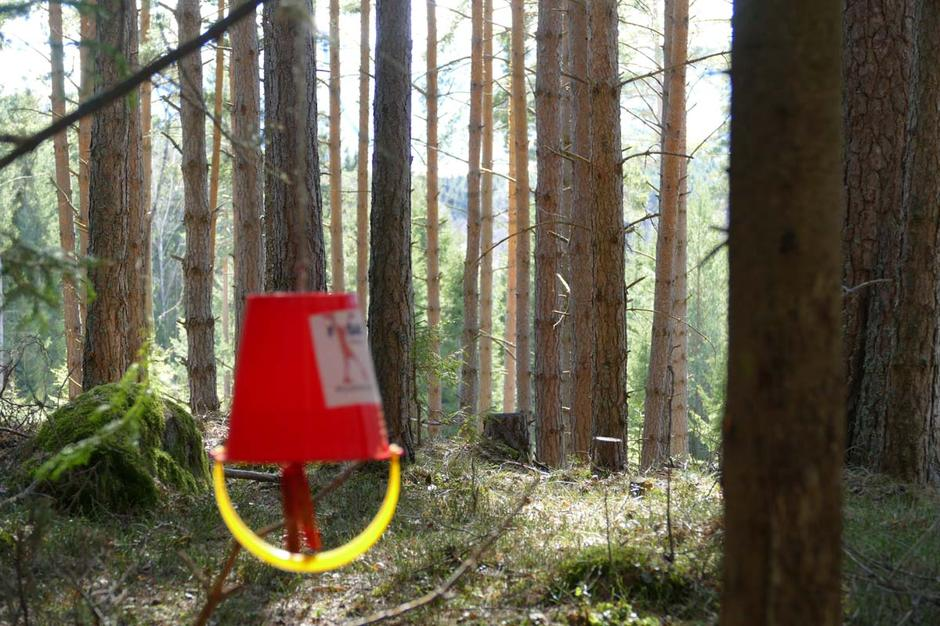 Turposter lyser opp i skogen