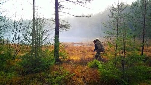 Myr- og skoglendt terreng i Østmarka utenfor Oslo. Motivet er vandringsmann langs myrkanten. Tatt med mobilkamera tidlig november.Vandringsmann er Gard Myrhe Høvik