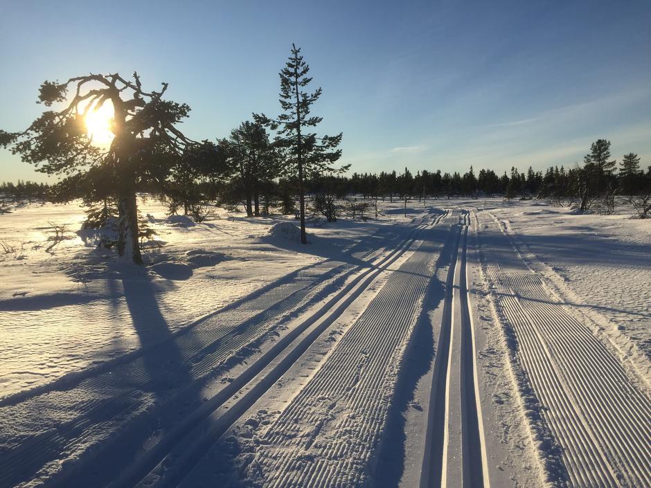 Kjempefine vinterforhold på Hedmarksvidda.