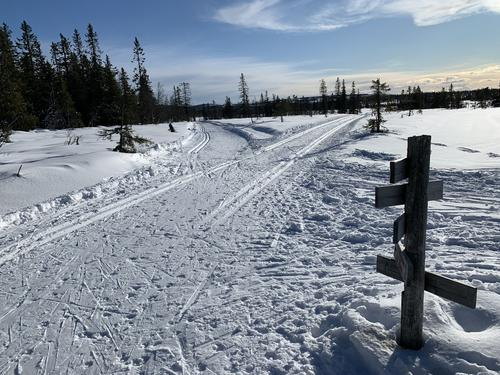Uke 11: Fint skiføre på Hedmarksvidda!