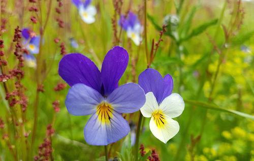 Blomstertur til Søtbakkdalen
