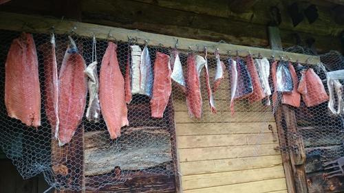 Røyking av fisk