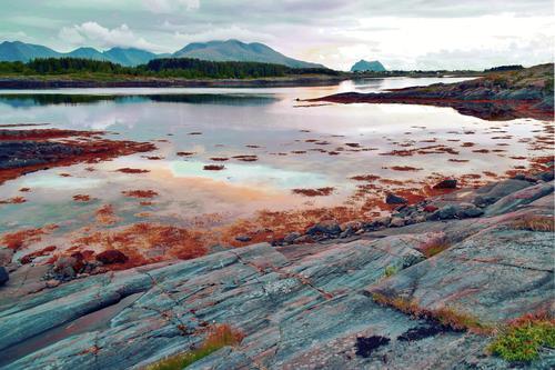 Vega øy, Nordland kommune