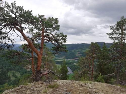 Kristiansmokollen, med utsyn nedover Begnadalen