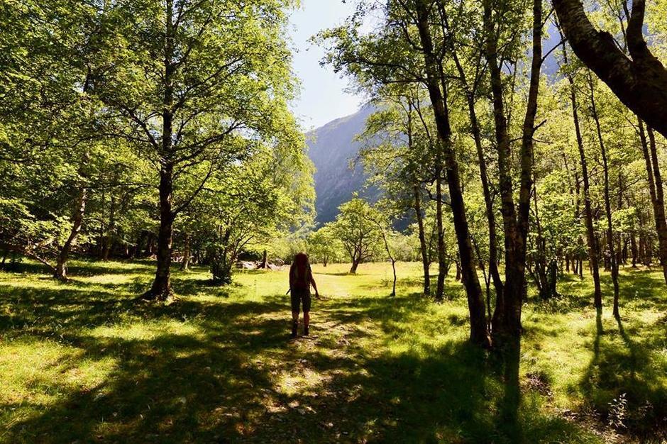 Ønsker du skygge kan telting i vakre Røssdalen være et alternativ. Eller ta meg hengekøye.