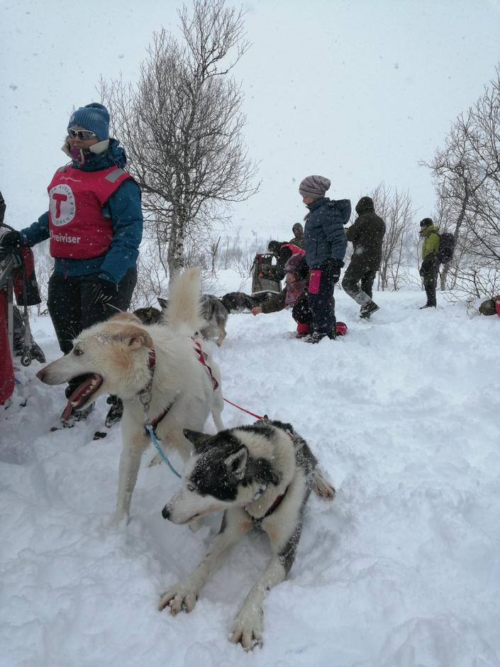 Ivrige hunder fra Granåsen huskies.