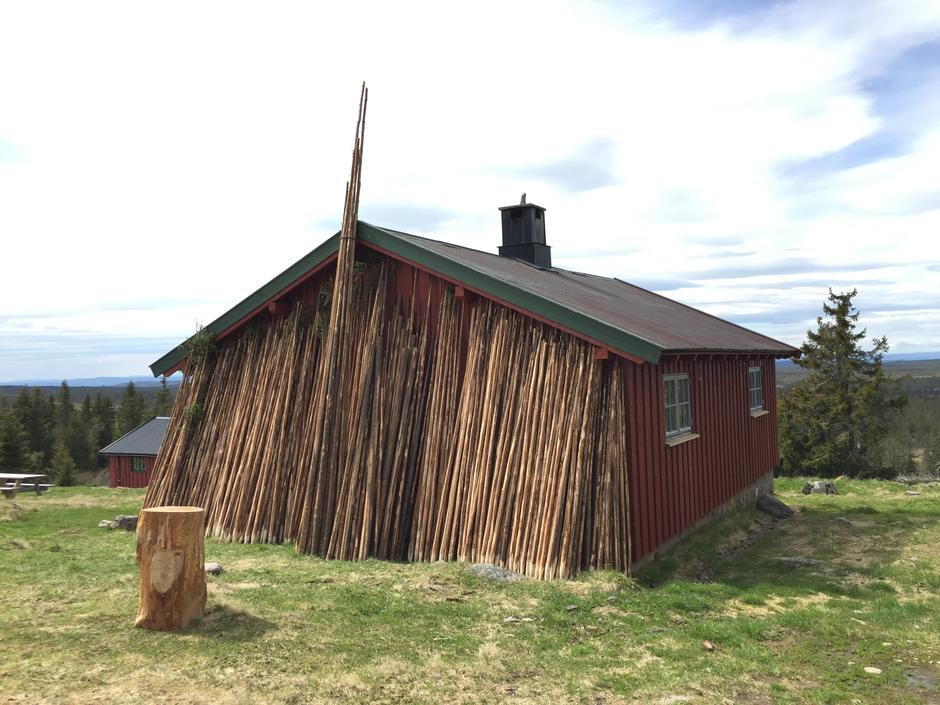 Staur er laget i skogen på Kolomoen og Mosjømarka. 600 stk, tynn gran