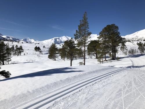 Skispor på Fursetfjellet