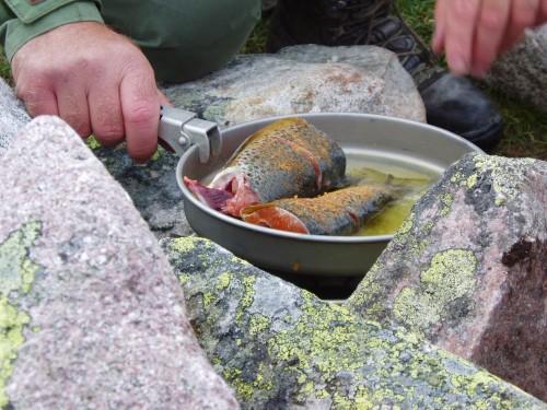 God steikt fjellaure, Hardangervidda juli 2005. Foto Ole Jakob Bråten